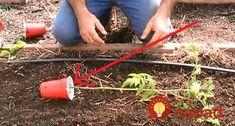 Zvláštny trik profíka, vďaka ktorému bude rajčina omnoho silnejšia a zdravšia ako kedykoľvek predtým. Outdoor Power Equipment, Techno, Gardening, Activities, Ideas, Garden, Greenhouses, Hacks, Plants