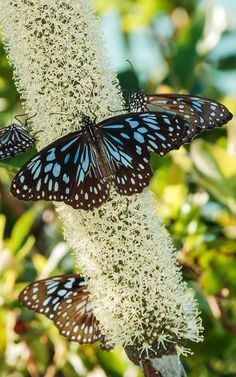 We are all butterflies. Earth is our chrysalis. - LeeAnn Taylor