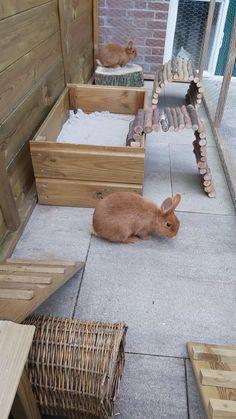 Diy Bunny Toys, Diy Bunny Cage, Bunny Cages, Rabbit Cages, Rabbit Run, House Rabbit, Pet Rabbit, Outdoor Rabbit Hutch, Indoor Rabbit