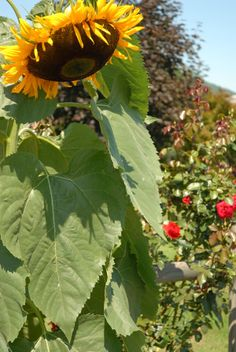 Giant Sunflower and Blooms from Nature & The Outdoors Part II by Lafayette Wattles, via Behance