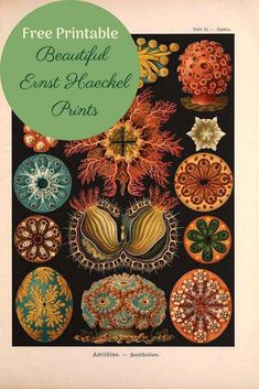 A fabulous collection of Ernst Haeckel prints both in colour and monochrome. These Century marine life illustrations are like great works of art. Ernst Haeckel, Vintage Prints, Vintage Posters, Collages, Free Printable Art, Free Printables, Great Works Of Art, Free Prints, Cat Prints