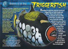Triggerfish - Wierd N'wild Creatures Wiki - Wikia