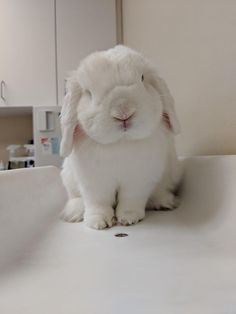 """The House Rabbit Guide - """"You took me where?"""" – Rabbit advice guides care and information for new bun - Fluffy Animals, Animals And Pets, Bunny Supplies, Pet Supplies, Pet Bunny Rabbits, Cute Bunny Pictures, Bunny Care, Cute Baby Bunnies, Fluffy Bunny"""