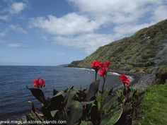 Flowers of all kinds dot the coastal towns of the Azores. Like this one on the coast of Maia