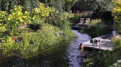 Van Mierlo Tuinen - Natuurlijke Zwemvijver - Luxe tuin met natuurlijke zwemvijver