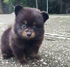 Cute Wild Animals, Baby Animals Super Cute, Cute Baby Dogs, Baby Animals Pictures, Cute Little Animals, Cute Animal Pictures, Cute Funny Animals, Animals Beautiful, Funniest Animals