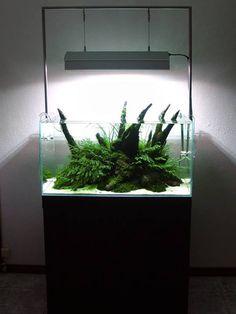 136 best aquarium inspiration images fish tanks aquarium rh pinterest com