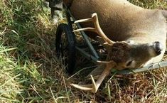 Then I hope that you will enjoy the strategies that are behind this MI whitetail habitat plan. Food Plots For Deer, Deer Food, Bow Hunting Deer, Whitetail Hunting, Nature Hunt, White Tail, Archery, Habitats, Acre