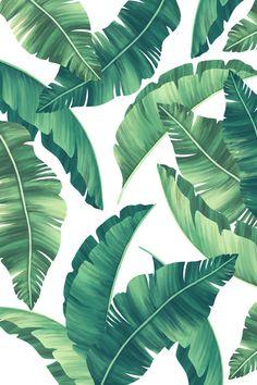 Elegant tropical print with beautiful le. Tree Leaf Wallpaper, Leaves Wallpaper Iphone, Zebra Wallpaper, Tropical Flowers, Tropical Leaves, Palm Tree Leaves, Palm Trees, Green Leaves, Watercolor Art