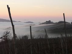 Italy - Nebbia in collina (Oltrepò Pavese), via Flickr.