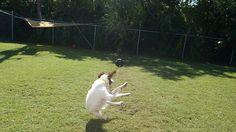 Judo kick!