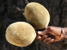 The Baobab Fruit in its hard shell - almost like a small coconut
