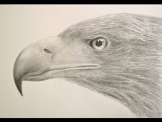 How to Draw a Realistic Eagle Head - Drawing Textures - YouTube