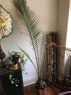 Whats wrong with my majesty palm? Its been getting progressively brown but nothing Ive tried has been working. Should I repot it? Is it beyond help? Majesty Palm, Whats Wrong With Me, Garden Games, Palm Plant, Horticulture, Indoor Plants, Landscaping, Roses, Gardening