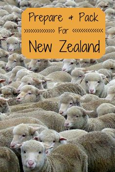 Guide to prepare and pack for a trip to New Zealand #TravelPlanningAddiction