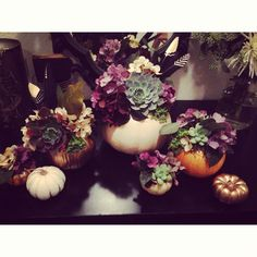 Succulent pumpkin centerpieces with hydrangeas and a touch of gold, love the way they turned out!