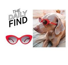 """Daily Find: Crap Eyewear Sunglasses"" by polyvore-editorial ❤ liked on Polyvore featuring Crap and DailyFind"