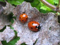 Ladybugs are one of my favorites!