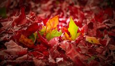 Autumn  colors by rajeeshiva #nature #photooftheday #amazing #picoftheday