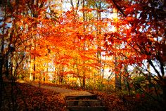 great fall pic ...color
