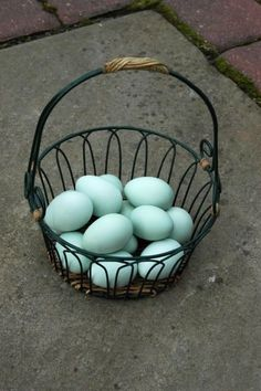 Ameraucana chicken eggs. I want to collect little blue eggs in a basket! :(
