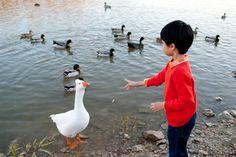 Feedin the Ducks