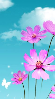 Pure Dreamy Beautiful Galsang Flower Cloudy Sky #iPhone #5s #wallpaper