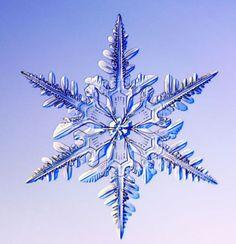 snowflake - Google Search