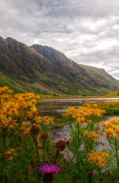 5 Reasons to Fall in Love With Scotland