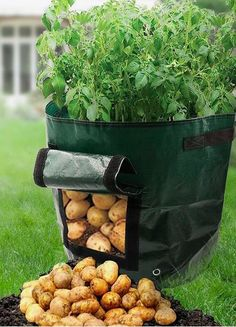 Backyard Vegetable Gardens, Veg Garden, Container Gardening Vegetables, Vegetable Garden Design, Fruit Garden, Lawn And Garden, Regrow Vegetables, Growing Vegetables, Growing Gardens