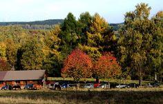 Der Spätherbst im Hochwald ... war immer schon etwas besonderes im Saarland. Vor allem rund um die Hochwald Alm. Und besonders bei Sonnenschein. :-)