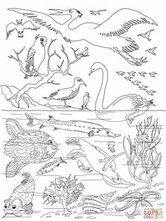 5th day of creation. Bible coloring pages.