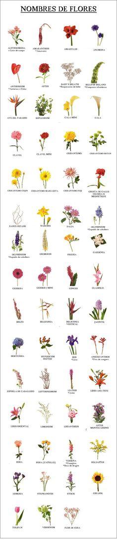Nombre de flores que puedes elegir para tu ramo de novia. www.carmenmerino.net/portada/nombres-de-flores/   www.carmenmerino.net