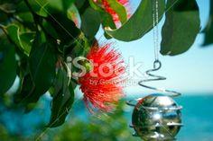 Pohutakawa and Christmas Decoration, New Zealand Royalty Free Stock Photo