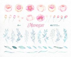 Moonlight: 46 Watercolor floral Elements popies by OctopusArtis