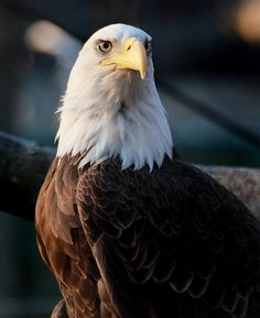 All sizes | Majestic | Flickr - Photo Sharing!