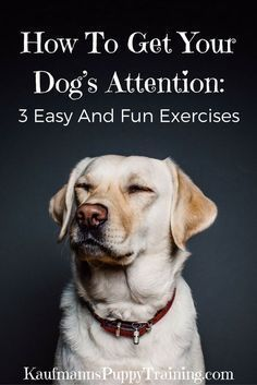 Do you know what one of the most important and underrated aspects of positive dog training is? Having you dogs attention.Which is why this post cover how to get your dog's attention as well as three easy and fun exercises to train this behavior. Read more at kaufmannspuppytraining.com @KaufmannsPuppy