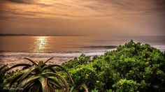 The beaches of Jeffreys Bay are its prime asset. There is no better time than early morning to take a stroll along the golden shores of Supertubes. Local photographer Robbie Irlam took this image of a golden morning at Supertubes. Local Photographers, Sunset, Day, Beach, Photos, Outdoor, Image, Beautiful, Sunsets