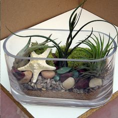 "AIR PLANT TERRARIUM Kit  from my air plant gardens by PaulaSmitsSucculents.  What I have used as the floral designer in order from bottom to top is natural colored sand, Baby miniature tiny sea shells, Southwestern river rock, a beautiful cream colored starfish, chartreuse Reindeer moss and finally, three different kinds of air plants.  This is my ""Zen Garden"" I love to imagine going into.  I find the pure simple form of this glass vessel to be calming.  Light a candle wink wink."