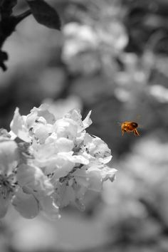 A #Colored #Bee in a #Colorful #World. #Art #Print by #PASob gefunden auf #Society6.com