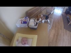 Dog Helps Mom Change Baby's Diaper - YouTube