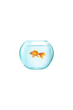 20 Types of Goldfish for Aquarium (Oranda, Shubunkin, Bubble Eye, Etc) Fish Vector, Vector Art, Goldfish Types, Golden Fish, Painted Rocks, Wine Glass, How To Draw Hands, Bubbles, Clip Art