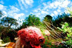 Ricardo Cases_La caza del lobo congelado