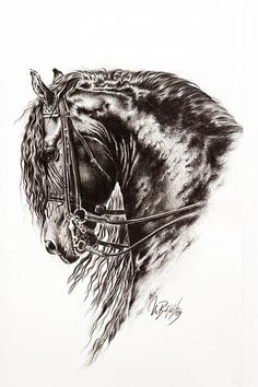 Friesian Horse Drawing of a Friesian Stallion by Art Imago