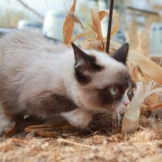 """The Daily Grump 
