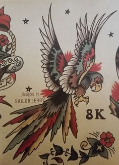 Traditional/old school tattoo, sailor jerry, parrot, bird