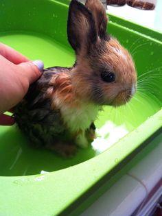Adorable bunny talking a bath. - Imgur