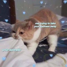28 of the freshest images and memes of today - - Humor Culinario Best Cat Memes, Cute Cat Memes, Cute Love Memes, Funny Cats, Funny Animals, Cute Love Pics, Love Memes For Him, Love You Meme, Best Friend Quotes Funny