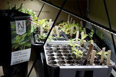 Allt om växtbelysning Container, Food, Essen, Meals, Yemek, Eten