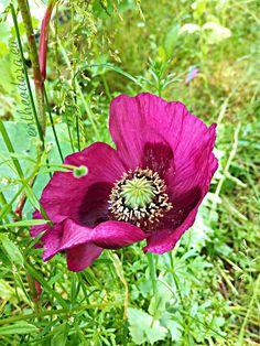 The surprise in the backyard - Entheodora Beautiful Flowers, Backyard, Plants, Patio, Backyards, Plant, Planets